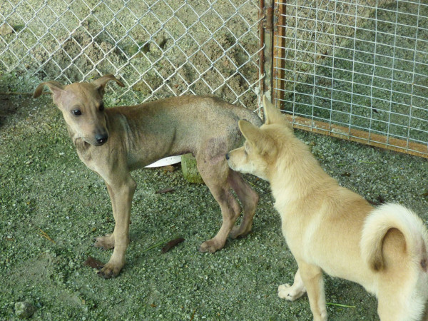 Две собаки в приюте