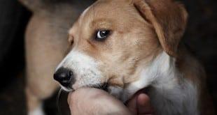 Собака кусает человека за ладонь