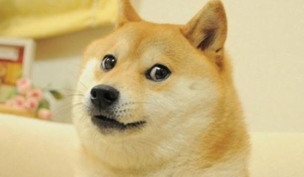 Doge - сиба-ину