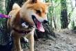 Собака с GPS-ошейником