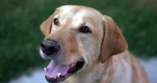 Как вакцинировать собаку