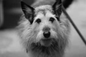 Беспородная собака из приюта