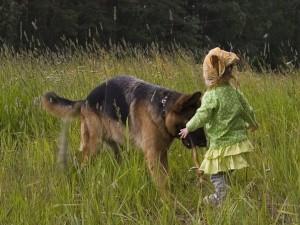 Немецкая овчарка - собака для ребенка