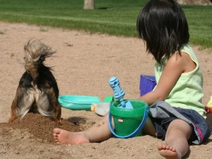 Собака играет с ребенком в песочнице