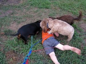 Собаки повалили ребенка во время игры