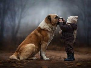 Большая собака и ребенок