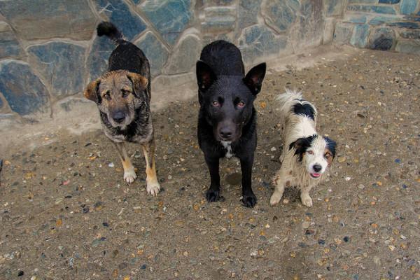 Три бездомных собаки
