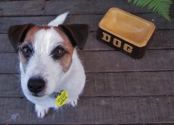 Собака ждет, когда ее миску наполнят
