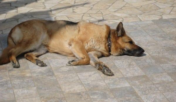 Собака лежит на холодном полу