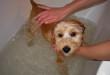 Собаку купают в ванне
