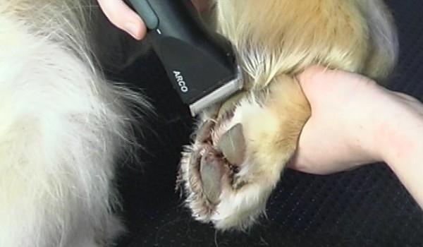 Удаление лишней шерсти между пальцами собаки