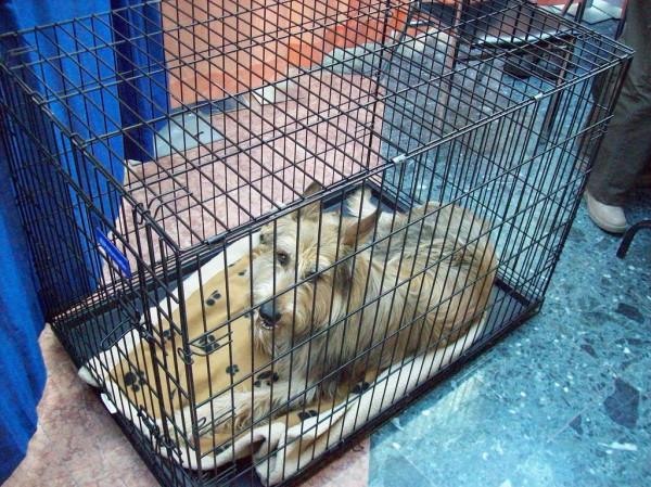 Потерявшаяся собака в клетке