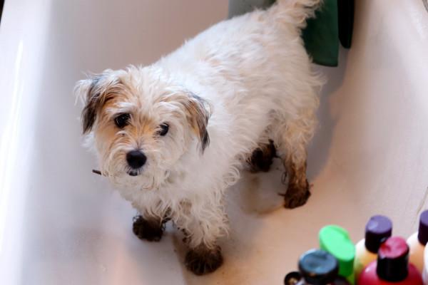 Собака с грязными лапами в ванне