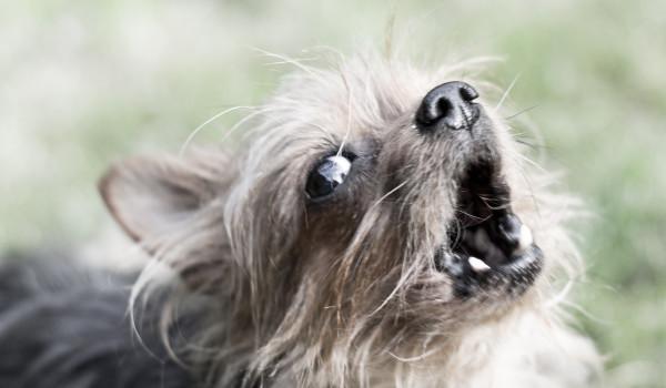 Собака лает от страха