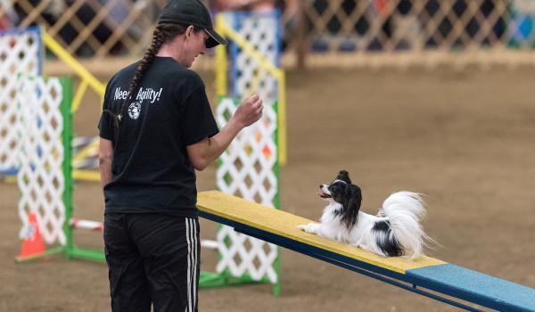 Собака с хендлером участвует в аджилити