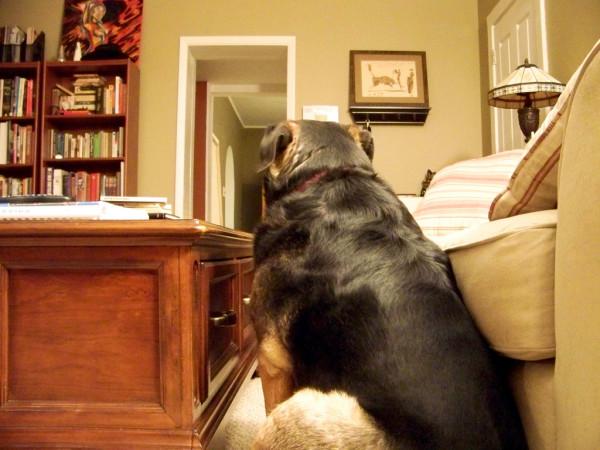 Собака сидит у дивана