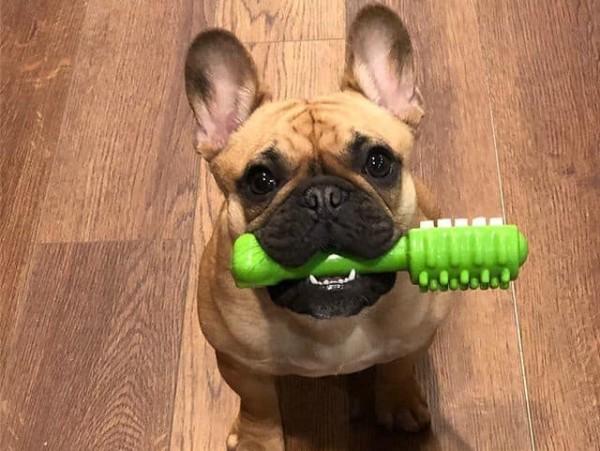 Собачья игрушка для зубов