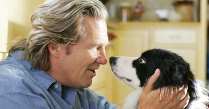"""Кадр из к/ф """"Год собаки"""" (США, 2009), один из героев которого – собака породы бордер-колли"""