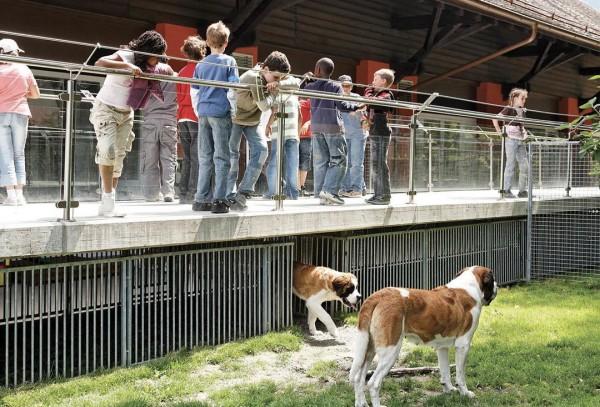 Barryland - живой музей сенбернара в Швейцарии