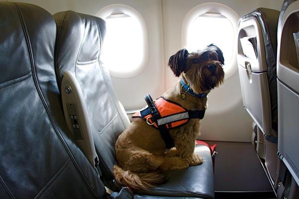 Чипированная собака в самолете