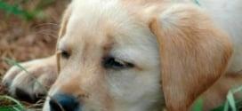 симптомы и профилактика энтерита у собак