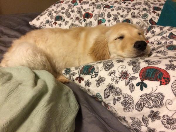 Довольная собака на кровати