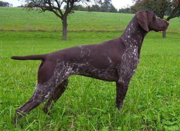 фото осанка собаки