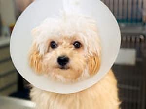 Всё о лечении лишаев у собак