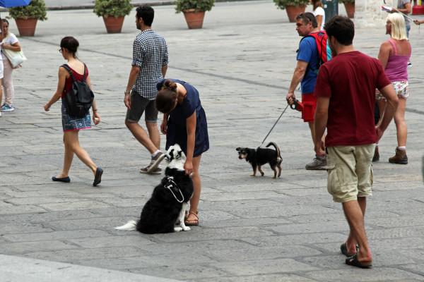 Собака выполняет команду сидеть на улице