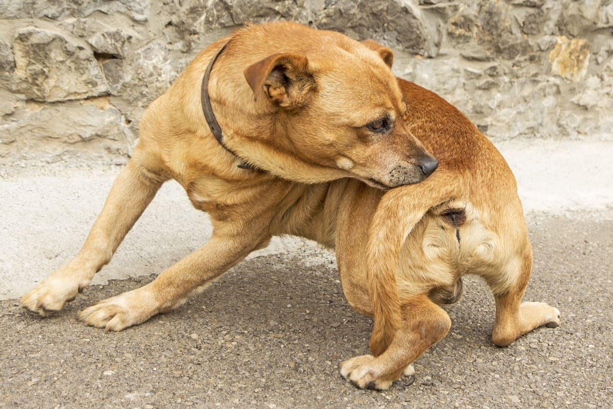 Royal Canin Sphynx (для сфинксов), 1 690 тг. — Petstore. kz