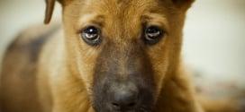 как отучить собаку если она писает дома