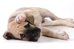 симптомы и лечение отравления у собак