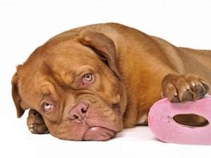 Что делать когда у собаки понос