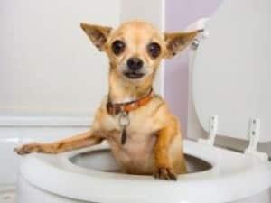 симптомы диареи у щенка