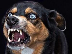 Как определить бешенство у собаки: симптомы и течение болезни