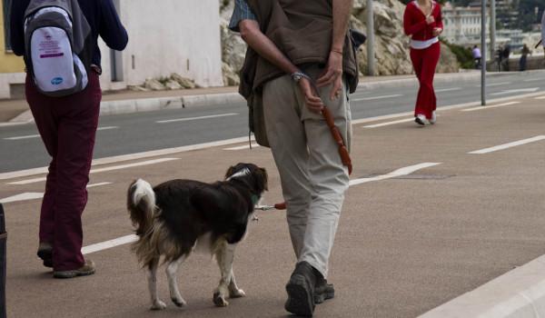 Собака идет рядом с хозяином по тротуару
