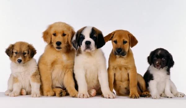 породы собак среднего размера