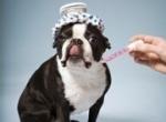 какая температура у собак нормальная