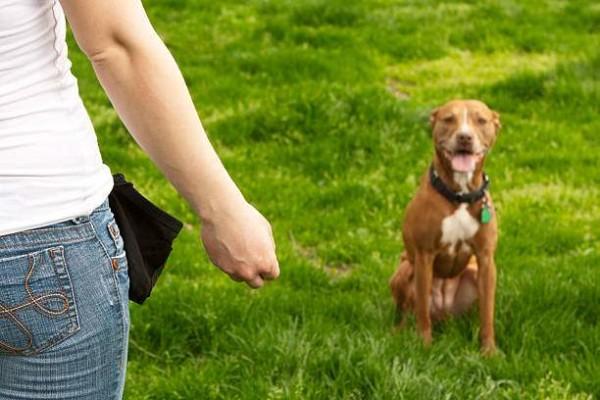 Хозяин подзывает собаку