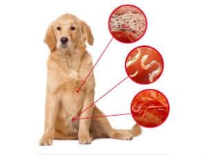 о симптомах глистов у собак