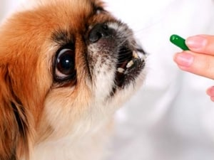 таблетки и препараты от глистных заболеваний
